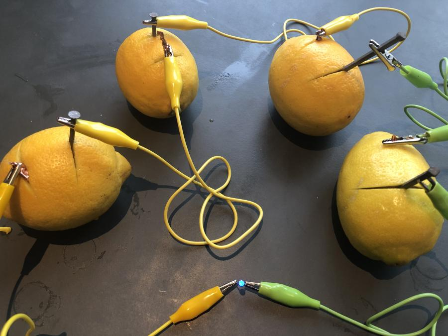 citroner krokodillenæb mønter søm leddiode
