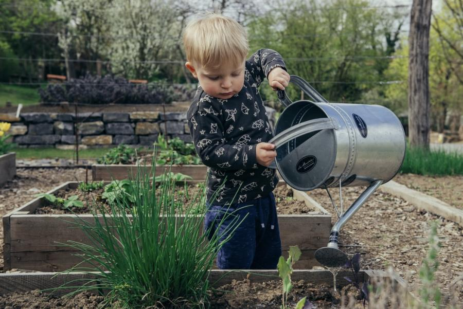 Lille dreng vander planter i et højbed med en stor vandkande af zink