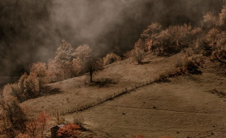 Mark og træer omgivet af sort røg